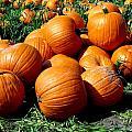 Pumpkin Pileup by Pamela Muzyka