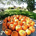 Pumpkin Round by Paula Deutz