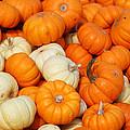 Pumpkin Squash by Richard Ortolano