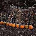 Pumpkins And Cornstalks by Wayne King
