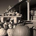 Pumpkins At The Farm Market October by Tony Ramos