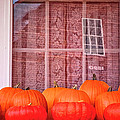 Pumpkins Curtains Red Barn by Tom Singleton