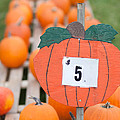 Pumpkins For Sale II by Clarence Holmes