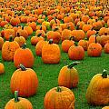 Pumpkins Forever by Susan Camden