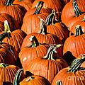 Pumpkins Galore by Julie Palencia