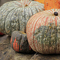 Pumpkins Galore V1 by Douglas Barnard