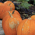 Pumpkins Galore V2 by Douglas Barnard