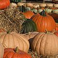 Pumpkins Pumpkins Everywhere by Kathy Clark