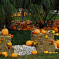 Pumpkins Under The Palms by DigiArt Diaries by Vicky B Fuller