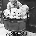 Puppies In A Pram by Fox Photos