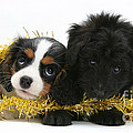 Puppies With Tinsel by Mark Taylor