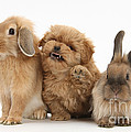 Puppy And Rabbits by Mark Taylor