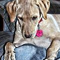 Puppy Contemplation