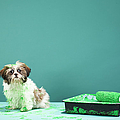 Puppy Covered In Green Paint From Paint Tray by Martin Poole