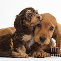 Puppy Love by Mark Taylor