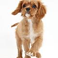 Puppy Trotting Foward by Mark Taylor