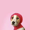 Puppy With Hat by Retales Botijero