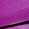 Pure Purple by Andrea Lastin