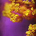 Purple And Gold 2 by Judi Bagwell