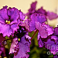 Purple And More Purple by Susan Herber