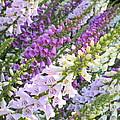 Purple And White Foxglove Square by Carol Groenen