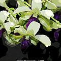 Purple And White Orchid Fx  by G Adam Orosco