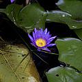 Purple Beauty by Douglas Barnard