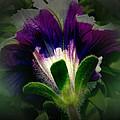 Purple Beauty by Ken Young