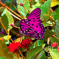 Purple Beauty by Monica Poole