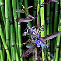 Blue Bursts From Bamboo by Lorraine Devon Wilke