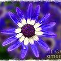 Purple Daisy Photoart by Debbie Portwood