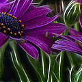 Purple Daisy by Stelios Kleanthous