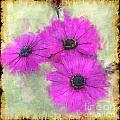 Purple Daisy Trio II by Debbie Portwood