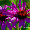 Purple Daisy's by Donna Greene