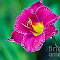 Purple  by Derek Pisieczko