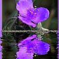 Purple Elegance - Spider Wort by Ericamaxine Price
