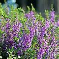 Purple English Garden  by Maria Urso