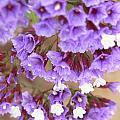 Purple Explosion by DLynne Warren