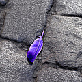 Purple Feather by Larry Mulvehill