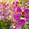 Purple Field by Rhonda Barrett