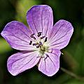 Purple Flower 1 by Joe Faherty