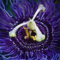 Purple Flower 3 by Sean Wray