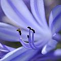 Purple Flower Close-up by Sami Sarkis