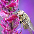 Purple Flower Fly by Christy Patino