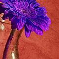 Purple Flower by Nathan Wright