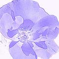Purple Flower by P S