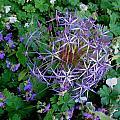 Purple Flower Sphere by April Patterson