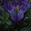 Purple Flower Springs by Robert Margetts