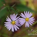 Purple Flowers by Grace Grogan