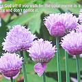 Purple Flowers In The Field by Ian  MacDonald